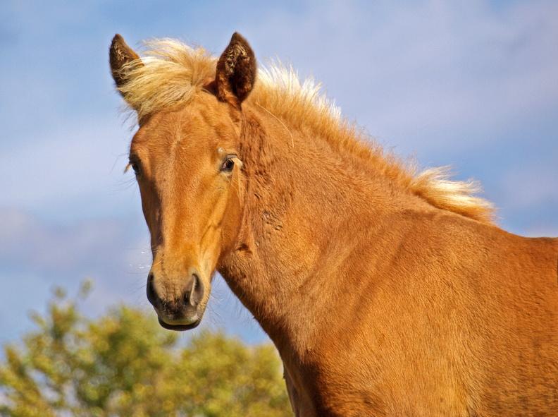 Série chevaux 20121030082835-30bc2c91-me