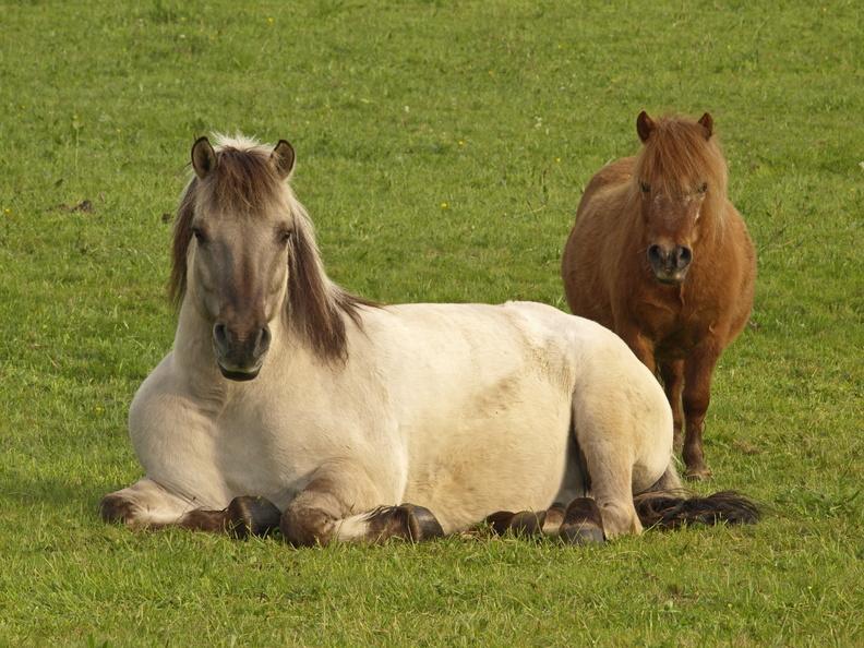 Série chevaux 20121030084042-a49f6c58-me