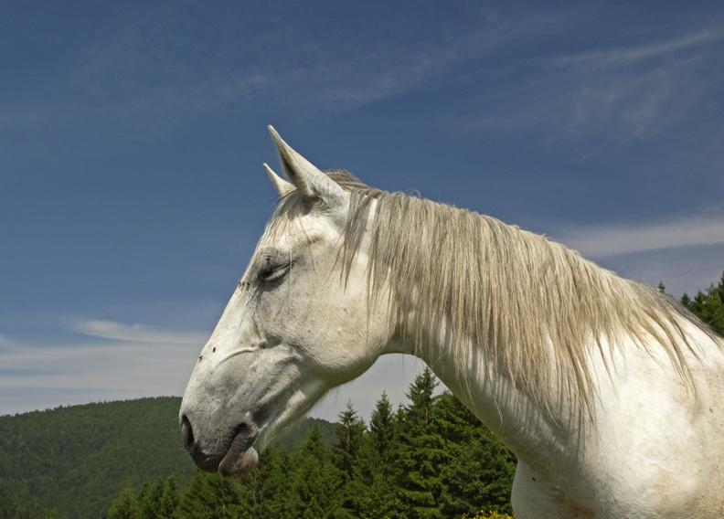 Série chevaux 20121030084353-4c7b4941-me