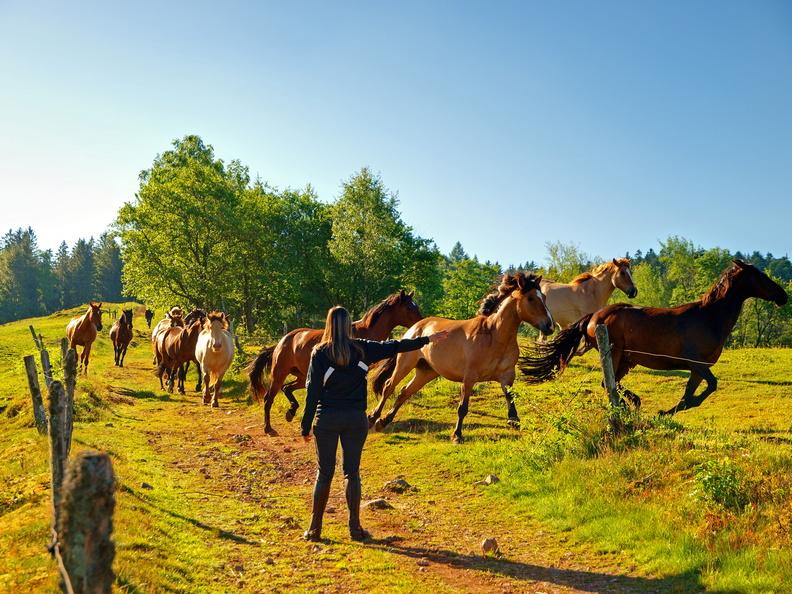 Série chevaux 20121030090928-b33dd141-me