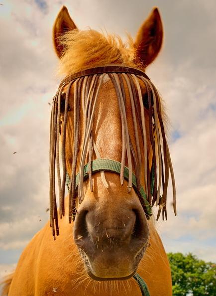 Série chevaux 20121030091259-9332bffe-me