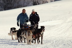 Mushing au Ballon d'Alsace