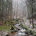 Ruisseau sous les giboulées||<img src=./_datas/w/s/0/ws0g15agsk/i/uploads/w/s/0/ws0g15agsk//2014/03/24/20140324164623-6ea50e24-th.jpg>