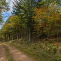 Chemin vers les Champis||<img src=./_datas/w/s/0/ws0g15agsk/i/uploads/w/s/0/ws0g15agsk//2014/10/12/20141012190206-0896ecf8-th.jpg>