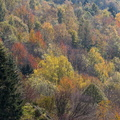 Couleurs d'automne||<img src=./_datas/w/s/0/ws0g15agsk/i/uploads/w/s/0/ws0g15agsk//2014/10/30/20141030104424-393a0f5d-th.jpg>