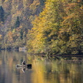 Pêcheur sur le Doubs||<img src=./_datas/w/s/0/ws0g15agsk/i/uploads/w/s/0/ws0g15agsk//2017/11/11/20171111150559-dbfce73c-th.jpg>