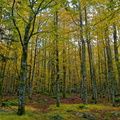 Les Vosges en automne||<img src=./_datas/w/s/0/ws0g15agsk/i/uploads/w/s/0/ws0g15agsk//2019/12/01/20191201113137-d96cecf0-th.jpg>