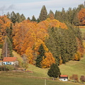 Automne dans les Vosges||<img src=./_datas/w/s/0/ws0g15agsk/i/uploads/w/s/0/ws0g15agsk//2020/11/07/20201107101035-8e96171a-th.jpg>