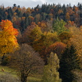 Automne dans les Vosges||<img src=./_datas/w/s/0/ws0g15agsk/i/uploads/w/s/0/ws0g15agsk//2020/11/07/20201107101108-130e5909-th.jpg>